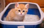 Почему кот мочится с кровью чем лечить. Что делать, если в моче кота появилась кровь? Методы лечения гематурии у кошки