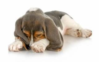 Собака сильно воняет. Запах от собаки или что делать, если от моей собаки пахнет псиной