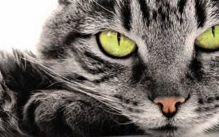 Могут ли коты лечить человека. Цвет имеет значение. Как же происходит лечение
