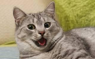 Сколько вздохов в минуту делает кошка. Что делать, если котенок часто дышит