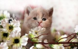 Как определить возраст котёнка в домашних условиях. Как определить возраст котенка: полезные советы
