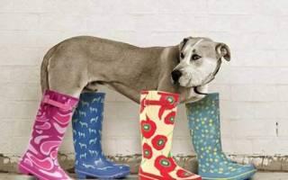 Как растянуть резиновый сапог под размер ноги? Как выбрать и как носить резиновые сапоги. Резиновые сапоги: как выбирать и с чем носить