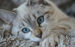 Струвиты в моче у кошки: причины образования и лечение