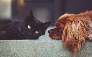 Любовь детей к животным высказывания. Красивые цитаты о животных — цитаты и афоризмы