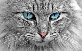 Кот друг человека цитаты. Цитаты великих людей о кошках