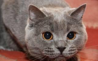 Кот ничего не ест что делать. Что делать, если кот перестал есть