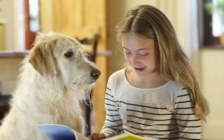 Терапия с животными как называется. Пет-терапия — лечение домашними животными. Лечение с помощью кошек