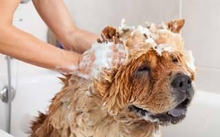 Собака очень сильно пахнет что делать. Как избавиться от запаха псины или что делать, если собака плохо пахнет