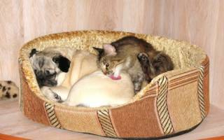 Как подружить собаку и котенка: практические советы. Если в дом принесли щенка — как подружить их с кошкой