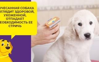 Лечение пироплазмоза у собак. Симптомы и лечение пироплазмоза у собак в домашних условиях
