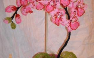 Как сделать цветы из бисера своими орхидеи. Орхидея (мозаичное и кирпичное плетение)