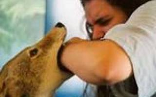Первые признаки заболевания бешенством у человека. Бешенство у собак и у людей после укуса, симптомы и лечение