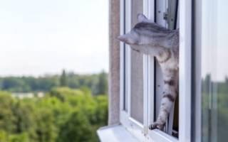 Что делать, если кошка выпала с верхнего этажа. Кошка упала с пятого этажа – что делать