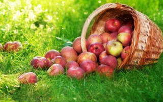 Праздник яблочный спас история праздника. Яблочный Спас – история праздника и традиции. Приметы на яблочный спас