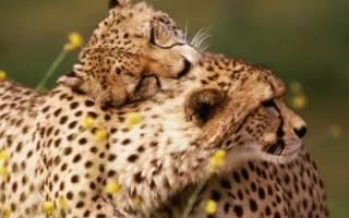Откуда мы знаем, что чувствуют животные? Испытывают ли животные настоящую любовь